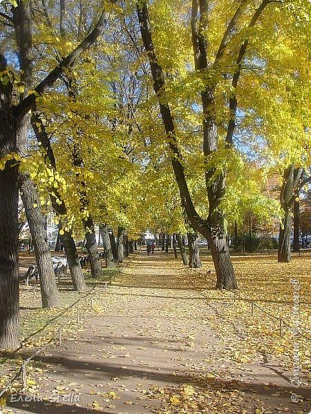 Друзья предлагаю прогуляться по Адмиралтейскому парку (Александровский) В парке много старых деревьев. Сегодня хорошая погодка. Солнце и тепло. Это только часть прогулки, остальное, если получиться в продолжении. Мозаика в вестебюле метро Адмиралтейская. фото 14