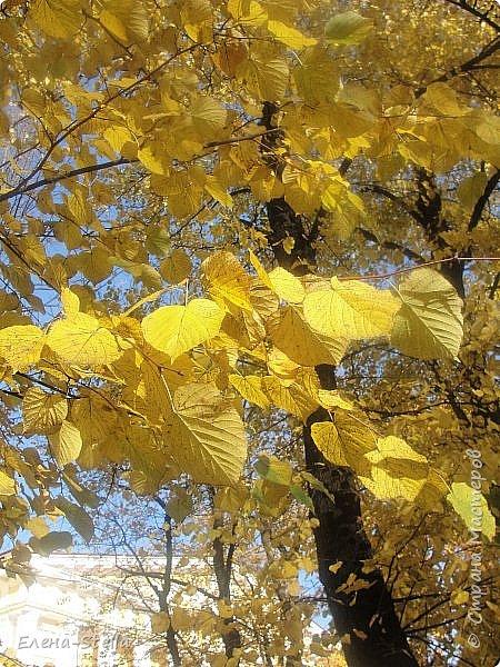 Друзья предлагаю прогуляться по Адмиралтейскому парку (Александровский) В парке много старых деревьев. Сегодня хорошая погодка. Солнце и тепло. Это только часть прогулки, остальное, если получиться в продолжении. Мозаика в вестебюле метро Адмиралтейская. фото 15