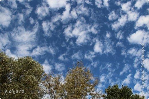 Здравствуйте!!!  Прошла уже половина октября и природа не перестаёт нас радовать своим теплом (сегодня обещали +19,у меня сейчас,в 11часов,показывает +15 в тени))  и красотой!!! фото 2