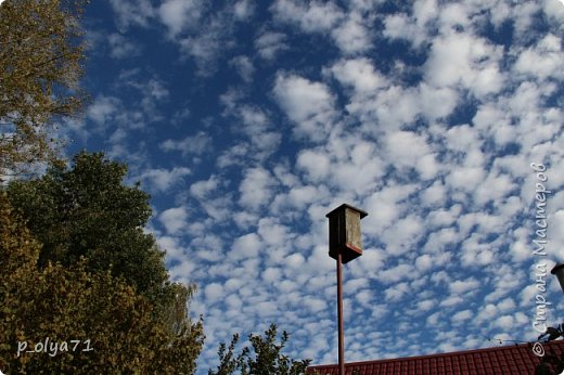 Здравствуйте!!!  Прошла уже половина октября и природа не перестаёт нас радовать своим теплом (сегодня обещали +19,у меня сейчас,в 11часов,показывает +15 в тени))  и красотой!!! фото 5