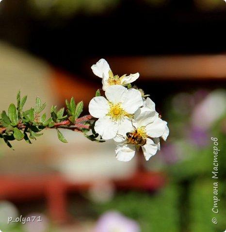 Здравствуйте!!!  Прошла уже половина октября и природа не перестаёт нас радовать своим теплом (сегодня обещали +19,у меня сейчас,в 11часов,показывает +15 в тени))  и красотой!!! фото 17