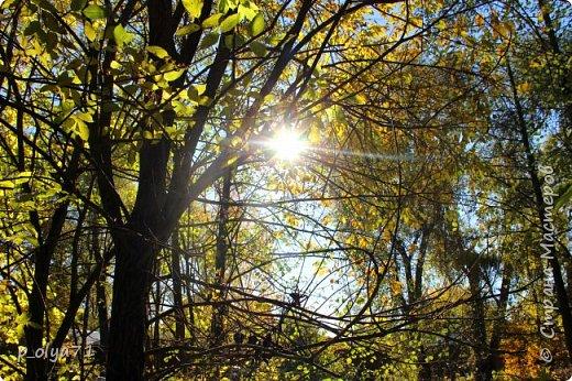 Здравствуйте!!!  Прошла уже половина октября и природа не перестаёт нас радовать своим теплом (сегодня обещали +19,у меня сейчас,в 11часов,показывает +15 в тени))  и красотой!!! фото 18