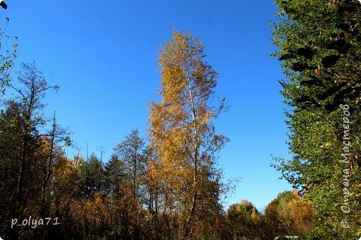 Здравствуйте!!!  Прошла уже половина октября и природа не перестаёт нас радовать своим теплом (сегодня обещали +19,у меня сейчас,в 11часов,показывает +15 в тени))  и красотой!!! фото 19