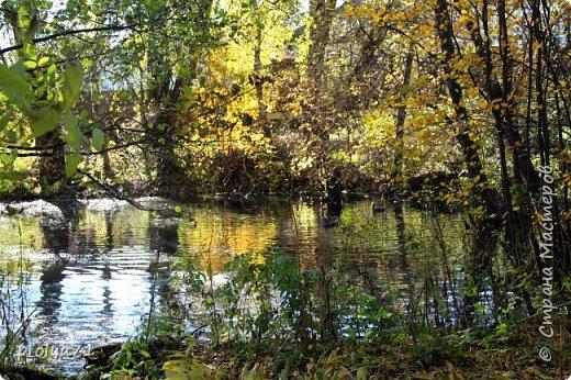 Здравствуйте!!!  Прошла уже половина октября и природа не перестаёт нас радовать своим теплом (сегодня обещали +19,у меня сейчас,в 11часов,показывает +15 в тени))  и красотой!!! фото 20