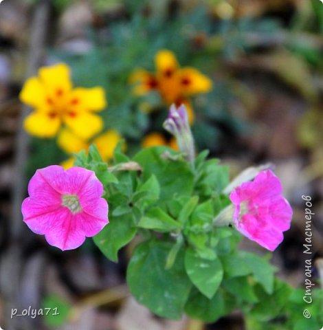 Здравствуйте!!!  Прошла уже половина октября и природа не перестаёт нас радовать своим теплом (сегодня обещали +19,у меня сейчас,в 11часов,показывает +15 в тени))  и красотой!!! фото 23