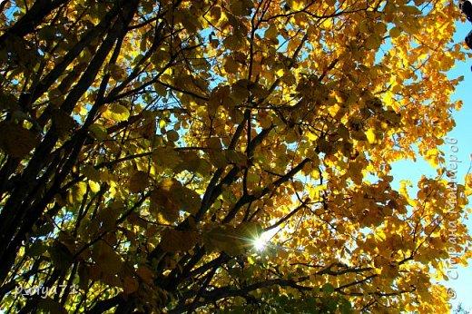 Здравствуйте!!!  Прошла уже половина октября и природа не перестаёт нас радовать своим теплом (сегодня обещали +19,у меня сейчас,в 11часов,показывает +15 в тени))  и красотой!!! фото 25