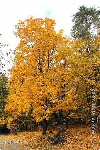 Здравствуйте!!!  Прошла уже половина октября и природа не перестаёт нас радовать своим теплом (сегодня обещали +19,у меня сейчас,в 11часов,показывает +15 в тени))  и красотой!!! фото 57