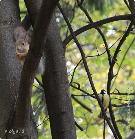 Здравствуйте!!!  Прошла уже половина октября и природа не перестаёт нас радовать своим теплом (сегодня обещали +19,у меня сейчас,в 11часов,показывает +15 в тени))  и красотой!!! фото 55