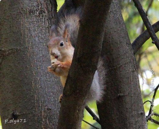 Здравствуйте!!!  Прошла уже половина октября и природа не перестаёт нас радовать своим теплом (сегодня обещали +19,у меня сейчас,в 11часов,показывает +15 в тени))  и красотой!!! фото 53