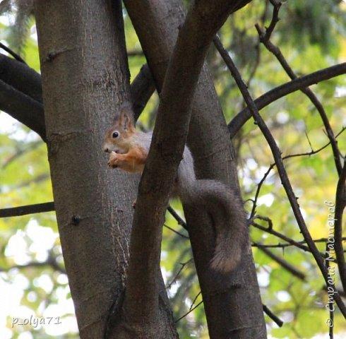 Здравствуйте!!!  Прошла уже половина октября и природа не перестаёт нас радовать своим теплом (сегодня обещали +19,у меня сейчас,в 11часов,показывает +15 в тени))  и красотой!!! фото 51