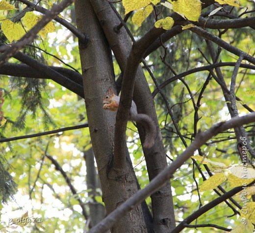 Здравствуйте!!!  Прошла уже половина октября и природа не перестаёт нас радовать своим теплом (сегодня обещали +19,у меня сейчас,в 11часов,показывает +15 в тени))  и красотой!!! фото 50