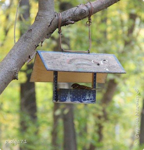 Здравствуйте!!!  Прошла уже половина октября и природа не перестаёт нас радовать своим теплом (сегодня обещали +19,у меня сейчас,в 11часов,показывает +15 в тени))  и красотой!!! фото 49