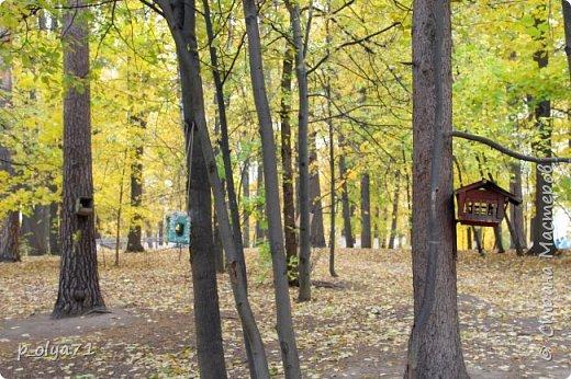 Здравствуйте!!!  Прошла уже половина октября и природа не перестаёт нас радовать своим теплом (сегодня обещали +19,у меня сейчас,в 11часов,показывает +15 в тени))  и красотой!!! фото 45