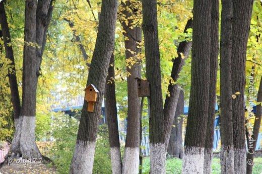 Здравствуйте!!!  Прошла уже половина октября и природа не перестаёт нас радовать своим теплом (сегодня обещали +19,у меня сейчас,в 11часов,показывает +15 в тени))  и красотой!!! фото 44