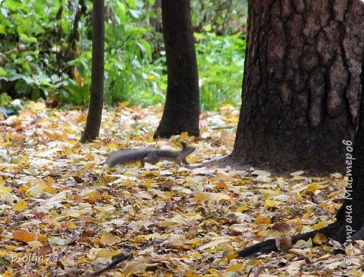 Здравствуйте!!!  Прошла уже половина октября и природа не перестаёт нас радовать своим теплом (сегодня обещали +19,у меня сейчас,в 11часов,показывает +15 в тени))  и красотой!!! фото 48