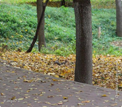 Здравствуйте!!!  Прошла уже половина октября и природа не перестаёт нас радовать своим теплом (сегодня обещали +19,у меня сейчас,в 11часов,показывает +15 в тени))  и красотой!!! фото 47
