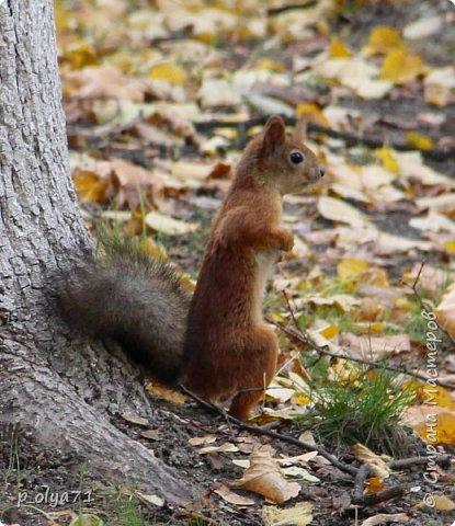 Здравствуйте!!!  Прошла уже половина октября и природа не перестаёт нас радовать своим теплом (сегодня обещали +19,у меня сейчас,в 11часов,показывает +15 в тени))  и красотой!!! фото 38