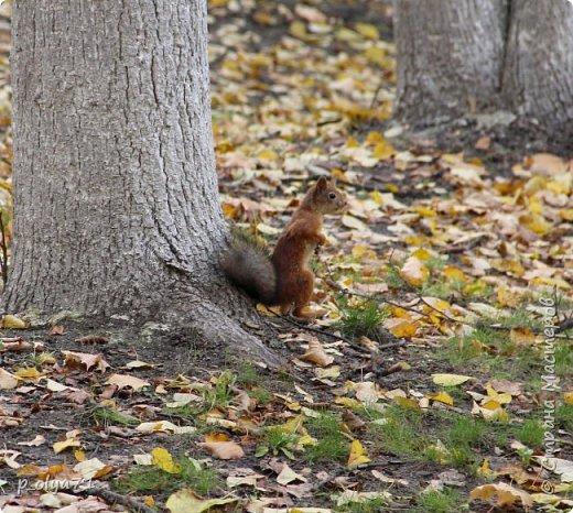 Здравствуйте!!!  Прошла уже половина октября и природа не перестаёт нас радовать своим теплом (сегодня обещали +19,у меня сейчас,в 11часов,показывает +15 в тени))  и красотой!!! фото 37