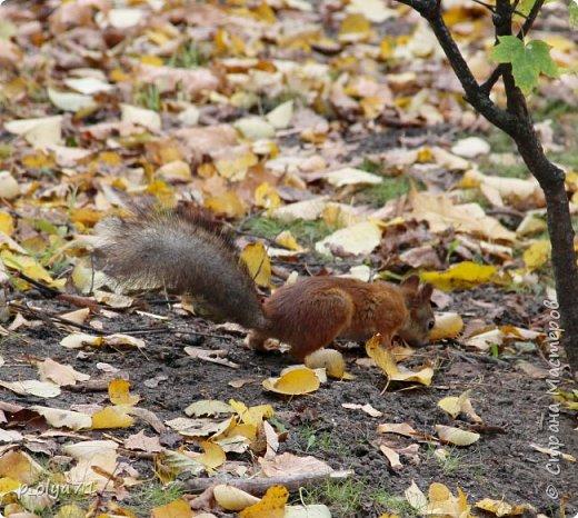 Здравствуйте!!!  Прошла уже половина октября и природа не перестаёт нас радовать своим теплом (сегодня обещали +19,у меня сейчас,в 11часов,показывает +15 в тени))  и красотой!!! фото 35
