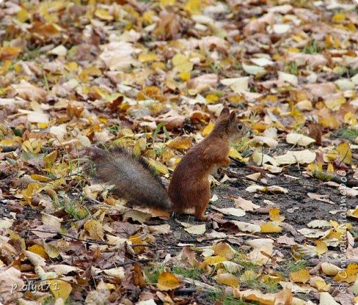 Здравствуйте!!!  Прошла уже половина октября и природа не перестаёт нас радовать своим теплом (сегодня обещали +19,у меня сейчас,в 11часов,показывает +15 в тени))  и красотой!!! фото 34