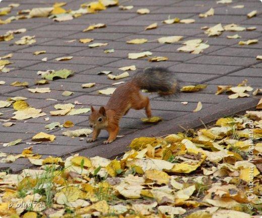 Здравствуйте!!!  Прошла уже половина октября и природа не перестаёт нас радовать своим теплом (сегодня обещали +19,у меня сейчас,в 11часов,показывает +15 в тени))  и красотой!!! фото 32