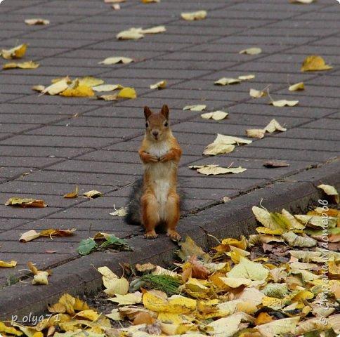 Здравствуйте!!!  Прошла уже половина октября и природа не перестаёт нас радовать своим теплом (сегодня обещали +19,у меня сейчас,в 11часов,показывает +15 в тени))  и красотой!!! фото 31