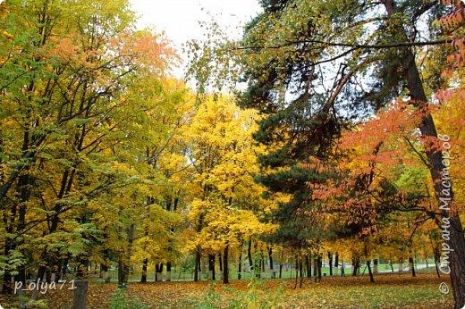 Здравствуйте!!!  Прошла уже половина октября и природа не перестаёт нас радовать своим теплом (сегодня обещали +19,у меня сейчас,в 11часов,показывает +15 в тени))  и красотой!!! фото 1