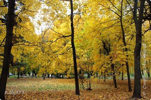 Здравствуйте!!!  Прошла уже половина октября и природа не перестаёт нас радовать своим теплом (сегодня обещали +19,у меня сейчас,в 11часов,показывает +15 в тени))  и красотой!!! фото 28