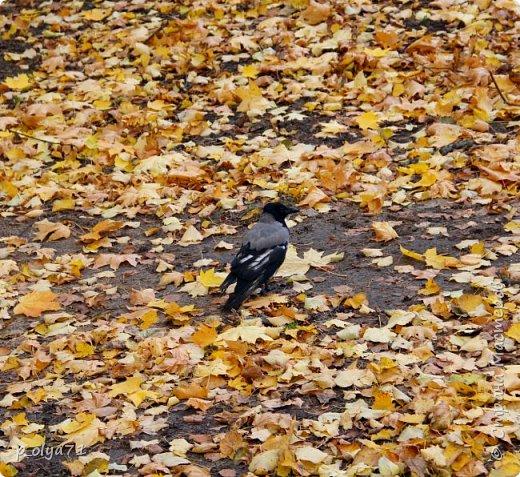 Здравствуйте!!!  Прошла уже половина октября и природа не перестаёт нас радовать своим теплом (сегодня обещали +19,у меня сейчас,в 11часов,показывает +15 в тени))  и красотой!!! фото 27