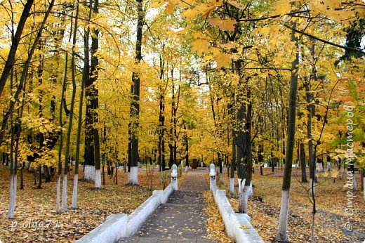 Здравствуйте!!!  Прошла уже половина октября и природа не перестаёт нас радовать своим теплом (сегодня обещали +19,у меня сейчас,в 11часов,показывает +15 в тени))  и красотой!!! фото 26