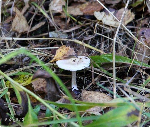 Здравствуйте!!!  Прошла уже половина октября и природа не перестаёт нас радовать своим теплом (сегодня обещали +19,у меня сейчас,в 11часов,показывает +15 в тени))  и красотой!!! фото 11