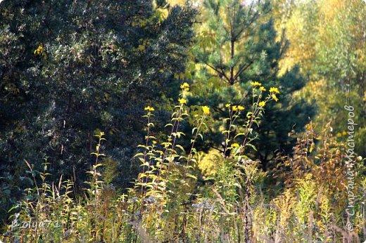 Здравствуйте!!!  Прошла уже половина октября и природа не перестаёт нас радовать своим теплом (сегодня обещали +19,у меня сейчас,в 11часов,показывает +15 в тени))  и красотой!!! фото 14