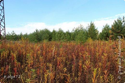 Здравствуйте!!!  Прошла уже половина октября и природа не перестаёт нас радовать своим теплом (сегодня обещали +19,у меня сейчас,в 11часов,показывает +15 в тени))  и красотой!!! фото 15