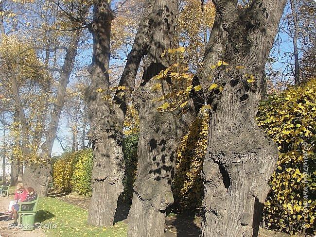 А теперь Летний САД. Сама давно не была. Произведенна реконструкция сада 1716 года, то есть с года создания. Все фантаны были утрачены наводнением и были закопаны.  Теперь можно полюбоваться ими, совсем как в Петергофе. Восстановлен голубиный повельон в который можно зайти и посмотреть небольшой фильм о реконструкции сада и посмотреть находки при раскопках.Сад разделен на две части.  Если заходить с Невы - камерные аллеи, очень уютные и интимные.  Вторая чась ближе к Инженерному замку оставленна как было раньше - простор, но шпалерные огрождения есть,  только они ниже и сами аллеи гораздо шире! В саду давольно тихо, пахнет прелыми листьями и звуки шероха настраивают на лерический лад. Так и кажется, что сейчас из-за поворота выйдет прекрасная дама с кавалером. Представляю как красиво, когда здесь проводится костюмированные гулянья! фото 15