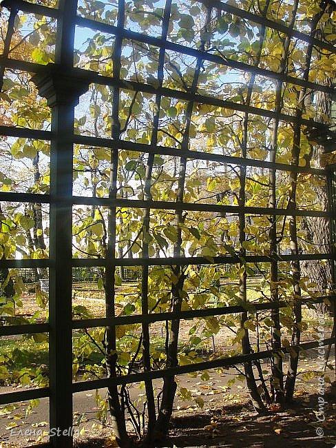 А теперь Летний САД. Сама давно не была. Произведенна реконструкция сада 1716 года, то есть с года создания. Все фантаны были утрачены наводнением и были закопаны.  Теперь можно полюбоваться ими, совсем как в Петергофе. Восстановлен голубиный повельон в который можно зайти и посмотреть небольшой фильм о реконструкции сада и посмотреть находки при раскопках.Сад разделен на две части.  Если заходить с Невы - камерные аллеи, очень уютные и интимные.  Вторая чась ближе к Инженерному замку оставленна как было раньше - простор, но шпалерные огрождения есть,  только они ниже и сами аллеи гораздо шире! В саду давольно тихо, пахнет прелыми листьями и звуки шероха настраивают на лерический лад. Так и кажется, что сейчас из-за поворота выйдет прекрасная дама с кавалером. Представляю как красиво, когда здесь проводится костюмированные гулянья! фото 19