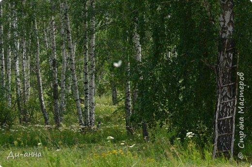 Любимая природа фото 5