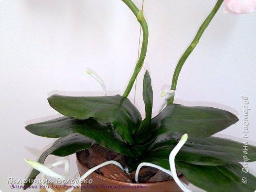 Добрый день мастера и мастерицы!!!У меня очередная порция орхидей разной окраски .Первую раскрашивала по МК Инны Голубевой. фото 7