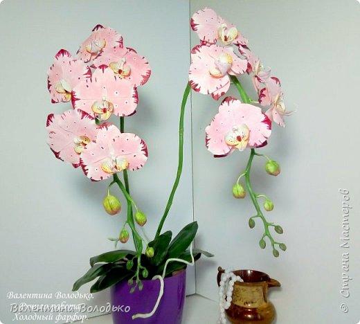 Добрый день мастера и мастерицы!!!У меня очередная порция орхидей разной окраски .Первую раскрашивала по МК Инны Голубевой. фото 3