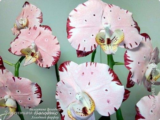 Добрый день мастера и мастерицы!!!У меня очередная порция орхидей разной окраски .Первую раскрашивала по МК Инны Голубевой. фото 2