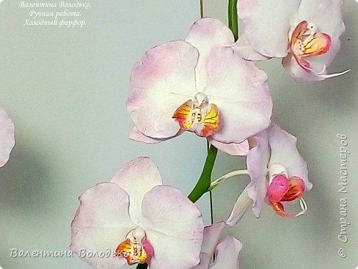 Добрый день мастера и мастерицы!!!У меня очередная порция орхидей разной окраски .Первую раскрашивала по МК Инны Голубевой. фото 6
