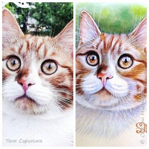 """И снова я к вам с котом. На Фейсбуке я проводила конкурс ко Дню животных на лучшее фото домашнего любимца. Победитель получал от меня бесплатный портрет. Участников было много, великолепные породистые кошки и коты, но этот кот покорил меня сразу своими янтарными глазами. Казалось бы, простой """"дворянин"""", но какой взгляд! фото 2"""