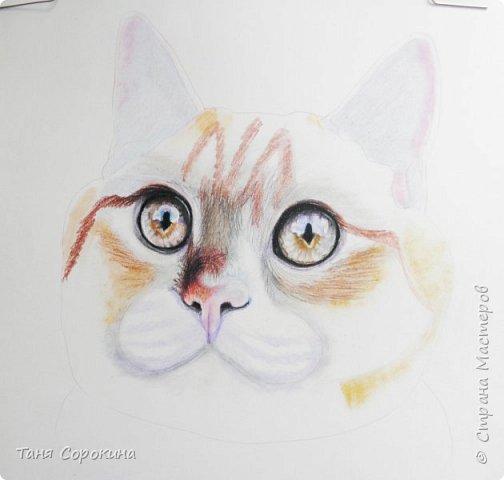 """И снова я к вам с котом. На Фейсбуке я проводила конкурс ко Дню животных на лучшее фото домашнего любимца. Победитель получал от меня бесплатный портрет. Участников было много, великолепные породистые кошки и коты, но этот кот покорил меня сразу своими янтарными глазами. Казалось бы, простой """"дворянин"""", но какой взгляд! фото 3"""
