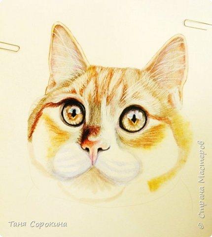 """И снова я к вам с котом. На Фейсбуке я проводила конкурс ко Дню животных на лучшее фото домашнего любимца. Победитель получал от меня бесплатный портрет. Участников было много, великолепные породистые кошки и коты, но этот кот покорил меня сразу своими янтарными глазами. Казалось бы, простой """"дворянин"""", но какой взгляд! фото 4"""