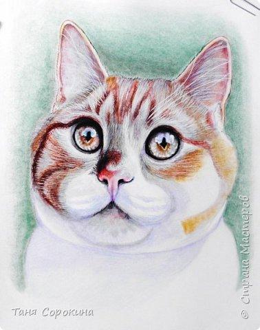 """И снова я к вам с котом. На Фейсбуке я проводила конкурс ко Дню животных на лучшее фото домашнего любимца. Победитель получал от меня бесплатный портрет. Участников было много, великолепные породистые кошки и коты, но этот кот покорил меня сразу своими янтарными глазами. Казалось бы, простой """"дворянин"""", но какой взгляд! фото 5"""
