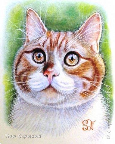 """И снова я к вам с котом. На Фейсбуке я проводила конкурс ко Дню животных на лучшее фото домашнего любимца. Победитель получал от меня бесплатный портрет. Участников было много, великолепные породистые кошки и коты, но этот кот покорил меня сразу своими янтарными глазами. Казалось бы, простой """"дворянин"""", но какой взгляд! фото 6"""
