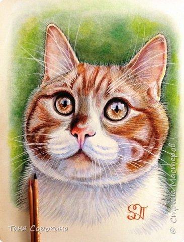 """И снова я к вам с котом. На Фейсбуке я проводила конкурс ко Дню животных на лучшее фото домашнего любимца. Победитель получал от меня бесплатный портрет. Участников было много, великолепные породистые кошки и коты, но этот кот покорил меня сразу своими янтарными глазами. Казалось бы, простой """"дворянин"""", но какой взгляд! фото 1"""