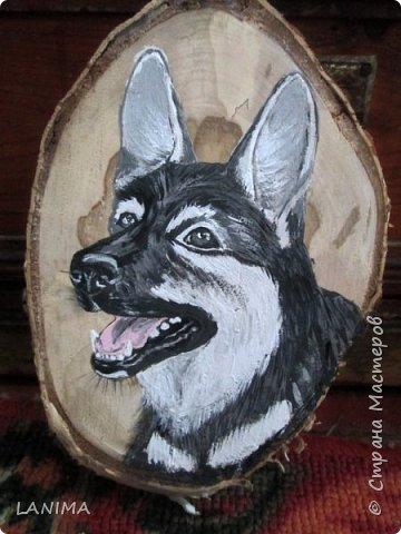 весёлая собачка Маллу, которая теперь живёт у нас, а её портрет поехал к прежним хозяевам на память!