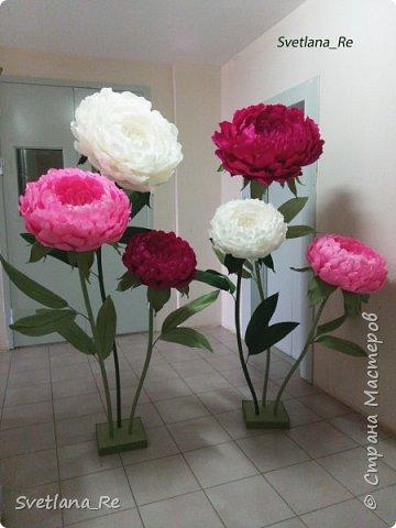 Что-то я в последнее время страдаю гигантоманией))) Люблю делать  цветы-гиганты!  Эти кустики в высоту 1,9 м Размер голов - 60,50,40 см в диаметре  Смотрятся очень пышненько ))  фото 5