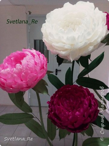 Что-то я в последнее время страдаю гигантоманией))) Люблю делать  цветы-гиганты!  Эти кустики в высоту 1,9 м Размер голов - 60,50,40 см в диаметре  Смотрятся очень пышненько ))  фото 6
