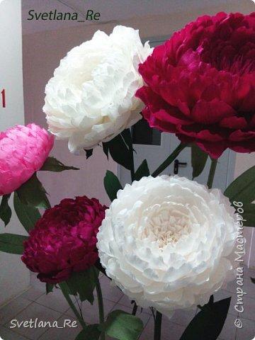 Что-то я в последнее время страдаю гигантоманией))) Люблю делать  цветы-гиганты!  Эти кустики в высоту 1,9 м Размер голов - 60,50,40 см в диаметре  Смотрятся очень пышненько ))  фото 7